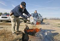 Authorities burn seized marijuana
