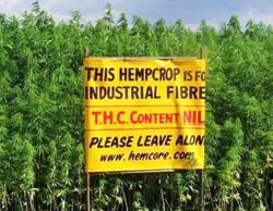 hemp-field-photo-leave-my-crop-alone-no-thc