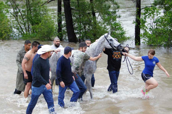 More than 100 horses were rescued by dozens of volunteers from rising water and another five remain missing after flash floods swept through Harris County Texas last week. / Photo: Mark Mulligan, Houston Chronicle