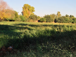 """A view of the yet to be plotted 4.4-acre lot locals refer to as """"The Jarvis Property"""" within the Town of Paradise Valley. /Independent Newsmedia/Melissa Fittro"""
